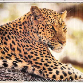 """Вертикальные тканевые жалюзи с фотопечатью """"Леопард"""""""